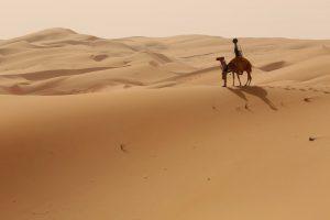 de woestijn van Google